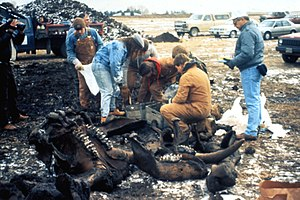 Mastodon - Excavation of a specimen in a golf course in Heath, Ohio, 1989