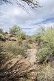 Butcher Jones Trail to Pinter's Point Loop, Tonto National Park, Saguaro Lake, Ft. McDowell, AZ - panoramio (128).jpg