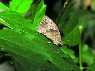 Butterfly 056eue.jpg
