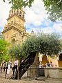 Córdoba (9362840400).jpg