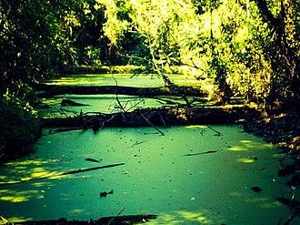 Caetetus Ecological Station - Image: Córrego da Estação Ecológica dos Caetetus