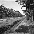 CH-NB - Belgisch-Kongo, Thysville (Mbanza Ngungu)- Landschaft - Annemarie Schwarzenbach - SLA-Schwarzenbach-A-5-26-021.jpg