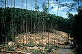 CSIRO ScienceImage 608 Eucalypt Plantation Harvest in India.jpg