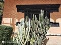 Cactus13.jpg