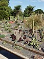 Cactus outside in Kew Gardens - geograph.org.uk - 226856.jpg