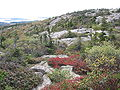 Cadillac Mountain, Acadia National Park.JPG