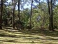 Cagar Alam G Mutis - panoramio.jpg
