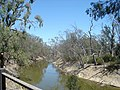 Campaspe River Tributary - panoramio.jpg