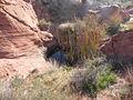 Canyon (19354570234).jpg