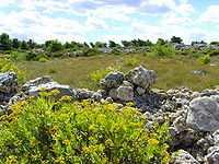 Cap Leucate (Aude), natural cover.jpg