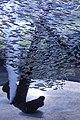Capetown - Two Oceans Aquarium IMG 9475.JPG