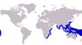 Caranx papuensis distribution.png