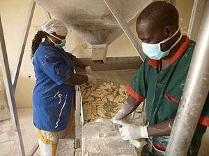 Cassava production in Nigeria - Wikipedia