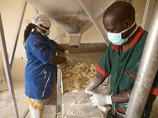 Cassava production in Nigeria