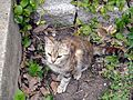 Cat among the ruins, Troy (Ilion), Turkey (7446449178).jpg