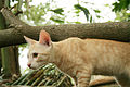 Cat public domain dedication image 0002.jpg
