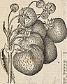 Catalogue of small fruits, &c. for spring of 1866 (1866) (20575510382).jpg