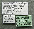 Cephalotes grandinosus casent0173699 label 1.jpg