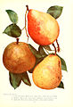 Chase fruit and flowers in natural colors (Page 15) (6237036169).jpg
