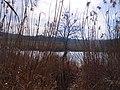 Cherkas'kyi district, Cherkas'ka oblast, Ukraine - panoramio (240).jpg