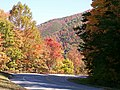 Chilhowee Nationa Forest road.jpg