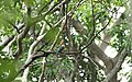 Chinnar Wildlife Sanctuary IMG 9072 (45).JPG