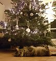Christmastree-Neozoon-2016.jpg