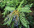 City of London Cemetery - flowering shrubs 15.jpg