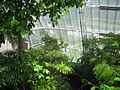 Cleveland Botanical Garden - interior 3.jpg