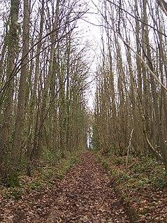 Collinpark Wood SSSI