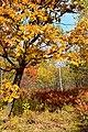 Colors of the far Eastern autumn. 05.jpg