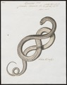 Coluber triscalis - - Print - Iconographia Zoologica - Special Collections University of Amsterdam - UBA01 IZ12100159.tif