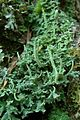 Common Powderhorn (991110354).jpg