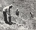 Control of field rodents in California (1947) (20505366739).jpg