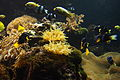 Coral reef... South end of my area (14119221571).jpg