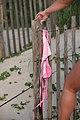 Corys Pink Bikini on Fence (2801171989).jpg
