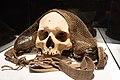 Cráneo trofeo del pueblo Bunum. Siglo XIX. Museo Nacional de Antropología de España 02.jpg
