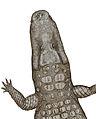 Crocodylus thorbjarnarsoni.jpg