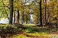 Dülmen, Börnste, Waldweg -- 2020 -- 3568.jpg