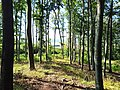 Długota (Opawskie Mountains), 2020.09.11 07.jpg