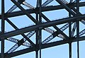 DG Sydney Harbour Bridge 3.jpg