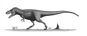 Oldman Formation - Daspletosaurus