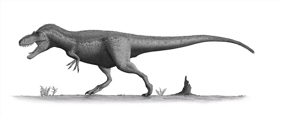 Daspletosaurus torosus steveoc