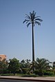 Date palm artificial tree.jpg