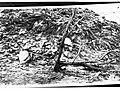 Dead Tree, Northern Territory(GN04512).jpg