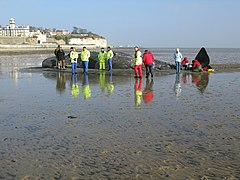 Dead whale on the mudflats at Pegwell Bay (geograph 2292237).jpg