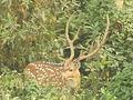 Deer 9.jpg