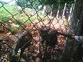 Deer Park Tirupati 05.jpg
