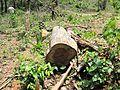 Degradação Florestal Amazônia 31.jpg