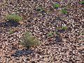 Desert (8).jpg